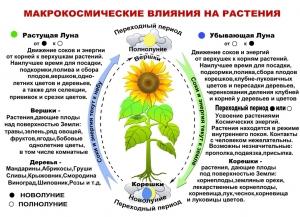 Макрокосмическое влияние на растения