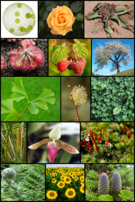 Diversity_of_plants_image_version_3